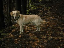 Pippi: Queen of the Forest