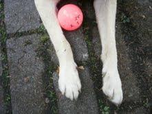 The Saga of Pippi's Pink Ball